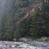 Alba della foresta della montagna Fotografia Stock