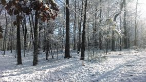 Alba della neve Fotografie Stock