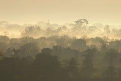 alba della pioggia della foresta Fotografie Stock