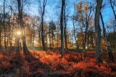 Alba di autunno del cielo blu Immagine Stock Libera da Diritti