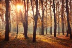 Alba di autunno in foresta Fotografie Stock Libere da Diritti