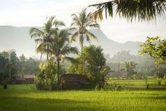 Alba di Bali nelle risaie. Immagine Stock Libera da Diritti