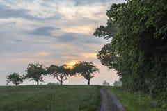 Alba di estate sopra gli alberi ed il pascolo fotografia stock libera da diritti