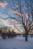 Alba di inverno con le nuvole, il cielo blu e gli alberi rosa Fotografia Stock