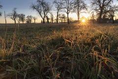 Alba di inverno sopra erba congelata immagine stock libera da diritti