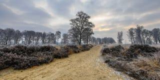 Alba di inverno sopra la traccia attraverso la brughiera gelida Fotografia Stock
