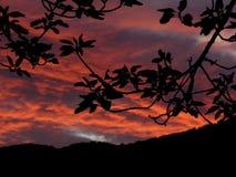 Alba di mattina in California Immagini Stock
