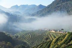 Alba di mattina con nebbia bianca al khang a terrazze verde 2000 del ANG di Doi della piantagione di tè Chiang Mai Thailand fotografia stock