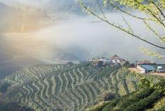 Alba di mattina con nebbia bianca al khang a terrazze verde 2000 del ANG di Doi della piantagione di tè il Nord della Tailandia Fotografia Stock Libera da Diritti