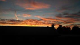 Alba di mattina della Buffalo Fotografia Stock