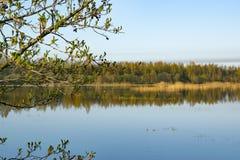 Alba di mattina, molla che fiorisce, paesaggio immagine stock libera da diritti