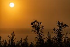 Alba di primo mattino con i cieli e la siluetta gialli delle piante nella priorità alta fotografia stock libera da diritti