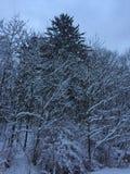 Alba dopo una bufera di neve Immagine Stock