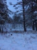 Alba dopo una bufera di neve Immagini Stock Libere da Diritti