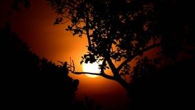 Alba drammatica arancio dietro gli alberi in una mattina fresca dall'India video d archivio