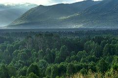 Alba drammatica nelle montagne con la foresta sempreverde spessa in priorità alta, montagne di Altai, il Kazakistan Immagine Stock