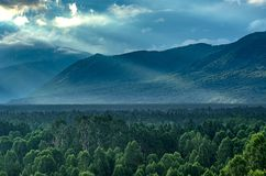 Alba drammatica nelle montagne con la foresta sempreverde spessa in priorità alta, montagne di Altai, il Kazakistan Fotografie Stock Libere da Diritti