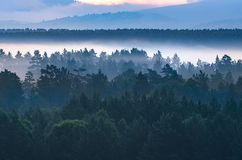 Alba drammatica nelle montagne con la foresta sempreverde spessa in priorità alta, montagne di Altai, il Kazakistan immagini stock