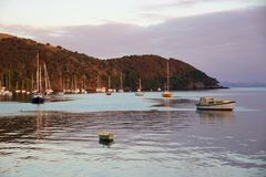 Alba e barche nel porto di Mangonui, Nuova Zelanda Fotografie Stock