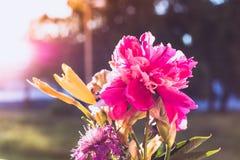 Alba e fiori fotografie stock libere da diritti