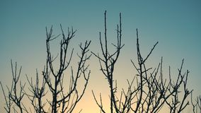 Alba ed albero di inverno senza foglie su un vento video d archivio
