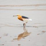 alba egret ardea большой Стоковые Изображения