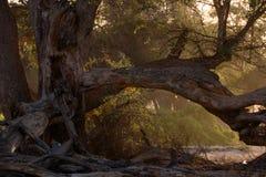 Alba in foresta in Namibia fotografia stock