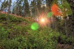 Alba in foresta profonda, erba in priorità alta, alberi nel fondo Foto variopinta dal parco nazionale della Slovacchia Fotografie Stock