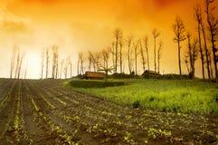 Alba fresca del terreno coltivabile Fotografie Stock