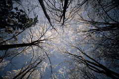 Alba ghiacciata Fotografie Stock