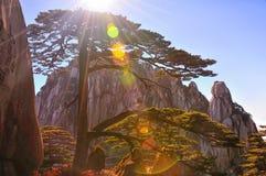 Alba (gialla) della montagna di Huangshan Fotografie Stock