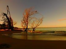 Alba i Caraibi, albero del pellicano, spiaggia, sabbia piana, PR della costa ovest fotografia stock libera da diritti