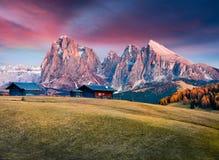 Alba incredibile in Alpe di Siusi con il bello larice giallo Fotografia Stock Libera da Diritti