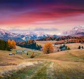 Alba incredibile in Alpe di Siusi con il bello larice giallo Immagini Stock Libere da Diritti