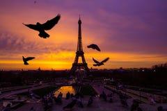 Alba incredibile impressionante del rosa-arancio-lillà Punto di vista di Eiffel immagine stock libera da diritti
