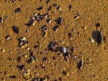 Alba, Macae - conchiglie casuali sulla sabbia Immagini Stock Libere da Diritti