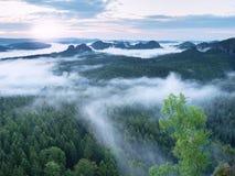 Alba maravillosa Los picos de colinas se están pegando hacia fuera de la niebla Fotos de archivo libres de regalías