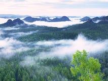 Alba maravillosa Los picos de colinas se están pegando hacia fuera de la niebla Foto de archivo