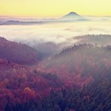 Alba maravillosa sobre el valle por completo de los picos coloridos de la niebla de altos árboles Fotografía de archivo libre de regalías