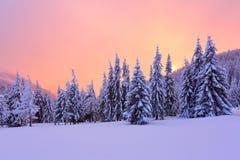 Alba meravigliosa di inverno alta nelle montagne in bei foreste e campi Fotografia Stock Libera da Diritti