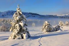 Alba nebbiosa in inverno Immagine Stock