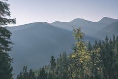 alba nebbiosa in montagne slovacche di Tatra con i vicoli leggeri in nebbia durante l'autunno scuro nelle tracce di escursione -  immagine stock libera da diritti