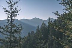 alba nebbiosa in montagne slovacche di Tatra con i vicoli leggeri in nebbia durante l'autunno scuro nelle tracce di escursione -  fotografie stock libere da diritti