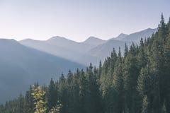 alba nebbiosa in montagne slovacche di Tatra con i vicoli leggeri in nebbia durante l'autunno scuro nelle tracce di escursione -  immagini stock libere da diritti