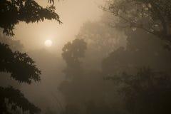 Alba nebbiosa nella foresta della giungla nel Nepal fotografie stock libere da diritti