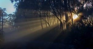 Alba nebbiosa nelle montagne blu Fotografie Stock Libere da Diritti