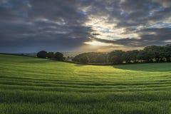 Alba nei campi, Cornovaglia, Regno Unito Fotografia Stock Libera da Diritti