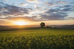 Alba nei campi, Cornovaglia, Regno Unito Fotografie Stock Libere da Diritti