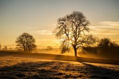 Alba nei campi dell'azienda agricola con l'albero ed il bello cielo nuvoloso, Cornovaglia, Regno Unito Immagini Stock Libere da Diritti
