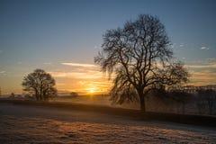 Alba nei campi dell'azienda agricola con l'albero ed il bello cielo nuvoloso, Cornovaglia, Regno Unito Immagine Stock Libera da Diritti
